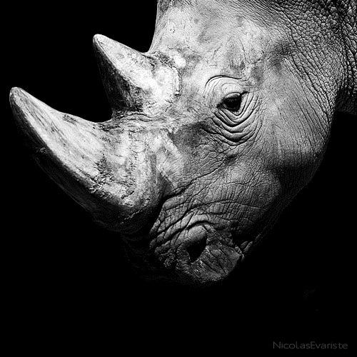 white-black-photography-animals-04