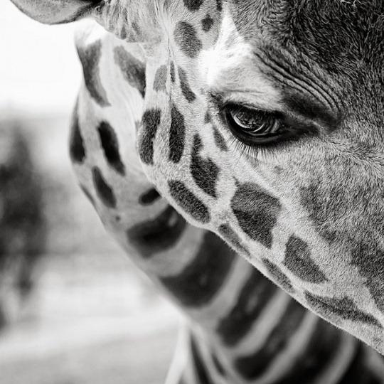 white-black-photography-animals-08