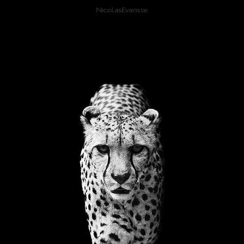 white-black-photography-animals-02